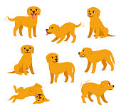 Cartoon dog set with different poses and emotions. Dog behavior, body language and face expressions. Cute yellow labrador retriever in simple cartoon style, isolated vector illustration.
