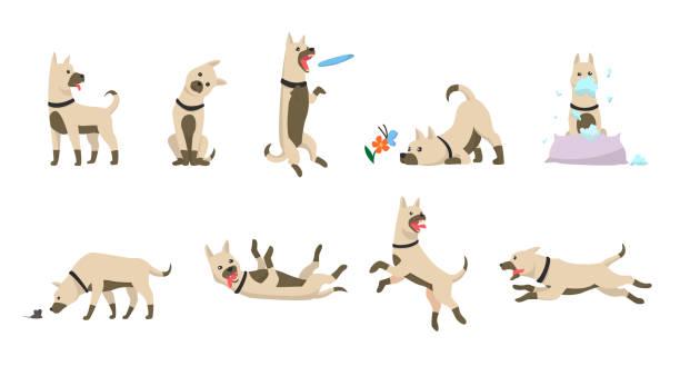 ilustrações, clipart, desenhos animados e ícones de jogo do cão dos desenhos animados. cães truques ícones e ação formação escavação sujeira comendo pet alimentos jumping wiggle dormindo correndo e latindo marrom feliz bonito animal poses vetor isolado ilustração símbolo - brincadeira