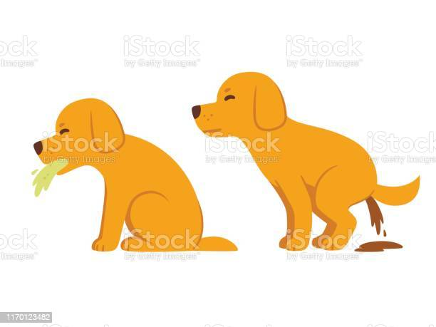 Cartoon dog vomiting and diarrhea vector id1170123482?b=1&k=6&m=1170123482&s=612x612&h=kvpqjuh2v ligysuu1ufumud2abhmlpq1psyfrijemy=