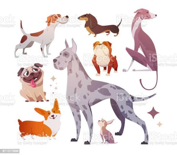 Cartoon dogs of different breeds and sizes vector id871372898?b=1&k=6&m=871372898&s=612x612&h=7hjc66bihwjzrfak7 nuqzfz8kyulvhxhtl4t32iatk=