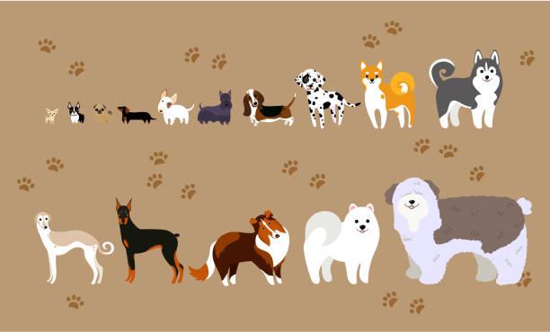 cartoon hunde verschiedener rassen - schoßhunde stock-grafiken, -clipart, -cartoons und -symbole