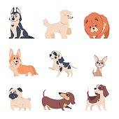 Cartoon dogs. Retriever labrador husky puppies, flat happy pets set, isolated home animals on white background. Vector dog set