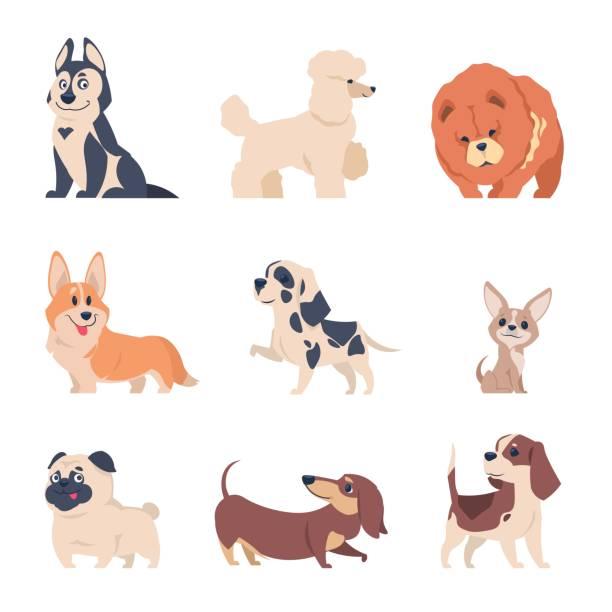 bildbanksillustrationer, clip art samt tecknat material och ikoner med tecknade hundar. retriever labrador husky valpar, platta lyckliga hus djur som, isolerade hem djur på vit bakgrund. vektor hund - tax
