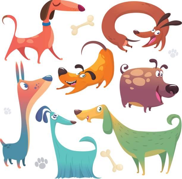 cartoon-hunde-satz. vektor-illustrationen von hunde-icons.  retriever, dackel, terrier, pitbull, spaniel, bulldog, basset hound, afghanischer windhund, barsoi - schoßhunde stock-grafiken, -clipart, -cartoons und -symbole