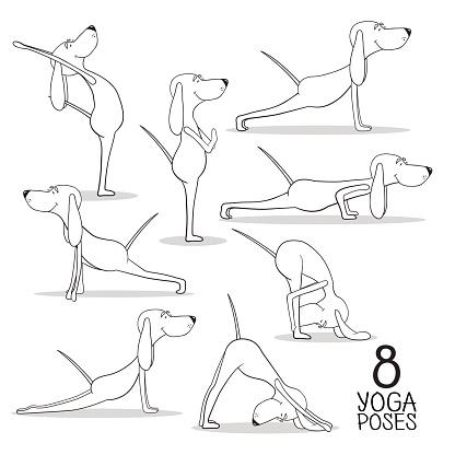 cartoon dogs show 8 yoga poses vector stock illustration