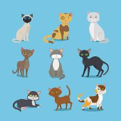 Cartoon domestic cat set