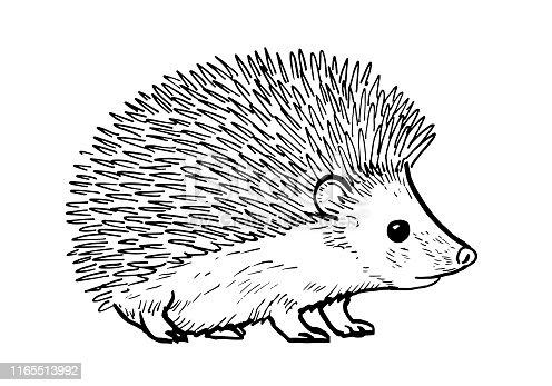istock Cartoon drawing of a cute hedgehod 1165513992