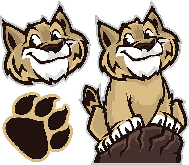 Cartoon drawing of a wildcat and pawprint This is a great image to add to your school or youth sports designs. This Wildcat or Bobcat has a real friendly attitude as he or she climbs the rocks to success. This animal pack comes with a separate head and paw. bobcat stock illustrations