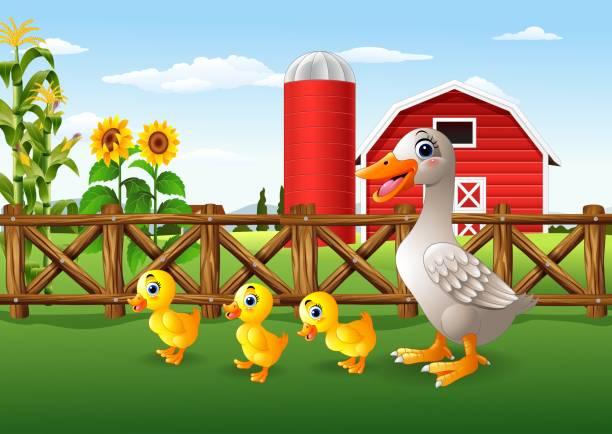 cartoon entenfamilie in der farm - entenhaus stock-grafiken, -clipart, -cartoons und -symbole