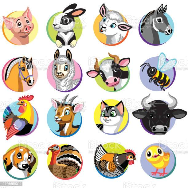 Cartoon farm anmals icons vector id1126659311?b=1&k=6&m=1126659311&s=612x612&h=oheabzx70nkl69ldmby80jwejdkpdtz9ggdooxvh3rc=