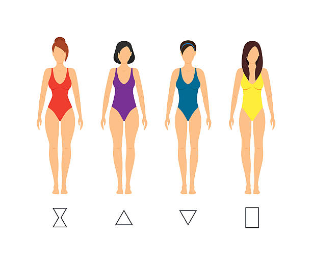 Best Female Anatomy Illustrations, Royalty-Free Vector Graphics