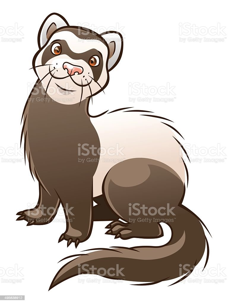 royalty free ferret clip art vector images illustrations istock rh istockphoto com cartoon ferret clipart heart clipart black and white