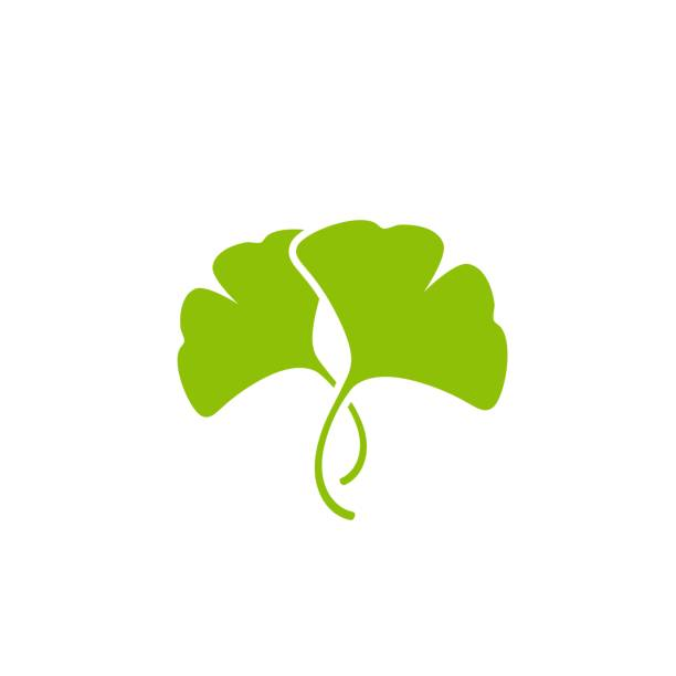 Cartoon flat green ginkgo biloba leaves Cartoon flat green ginkgo biloba leaves isolated on white. Nature eco icon. Vector illustration. Leaflet organic icon. Cosmetics and medical plant icon ginkgo stock illustrations