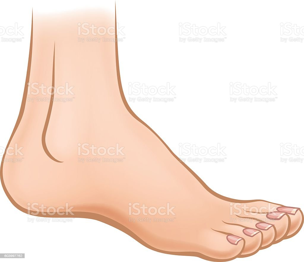 Cartoon Foot vector art illustration
