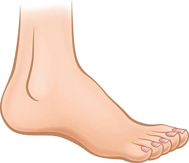 cartoon foot - ludzka noga stock illustrations