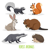 Cartoon forest animals set. Skunk, hedgehog, hare, squirrel, badger and beaver. Funny comic creature collection. Vector educational illustrations.