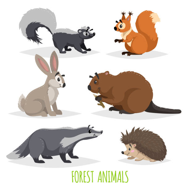 Cartoon forest animals set. Skunk, hedgehog, hare, squirrel, badger and beaver. Funny comic creature collection. Vector educational illustrations. Cartoon forest animals set. Skunk, hedgehog, hare, squirrel, badger and beaver. Funny comic creature collection. Vector educational illustrations. EPS10 + JPEG preview. beaver stock illustrations