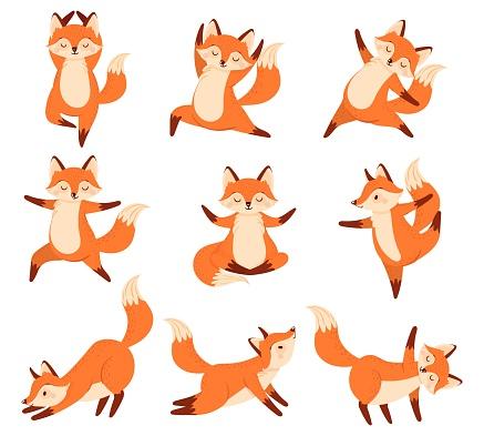 Cartoon fox in yoga poses. Healthy gymnastics, breathing exercises and sport animal mascot vector illustration set