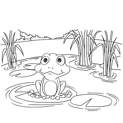 Vetores De Sapo Desenho Animado Na Almofada De Lirio No Lago