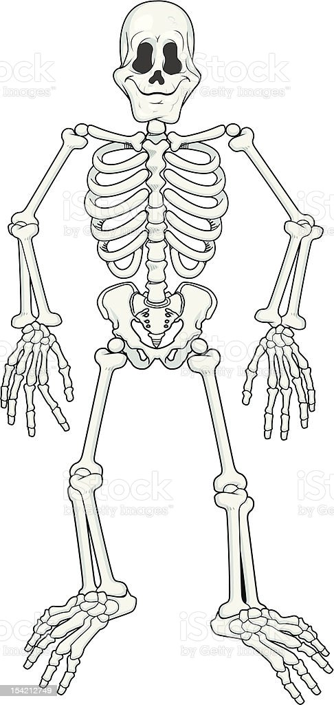 Cartoon fully poseable skeleton vector art illustration