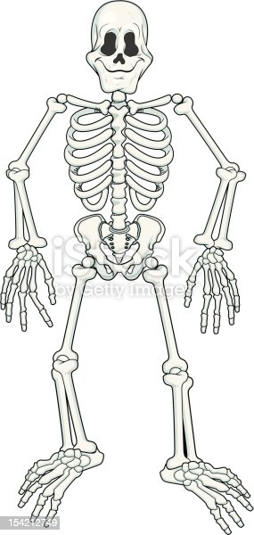 Cartoon Fully Poseable Skeleton Stock Vector Art & More