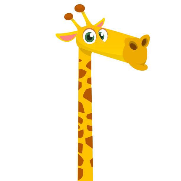 Cartoon funny giraffe. Vector illustration of african savanna giraffe smiling. Cartoon funny giraffe. Vector illustration of african savanna giraffe smiling. neck stock illustrations