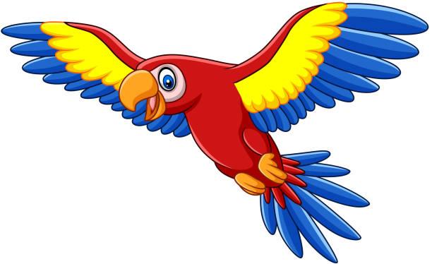 ilustrações de stock, clip art, desenhos animados e ícones de cartoon funny macaw flying - arara