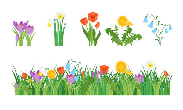 Cartoon Garden Flowers and Element Set. Vector Cartoon Garden Flowers and Element Set Concept Flat Design Style Include of Grass, Plant and Leaf. Vector illustration daffodil stock illustrations