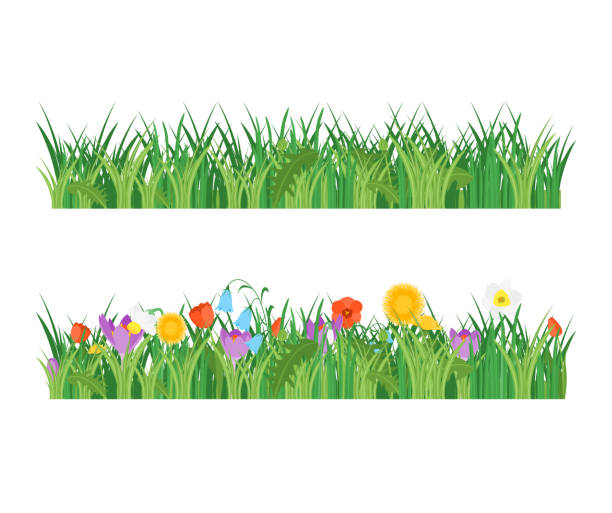 illustrations, cliparts, dessins animés et icônes de cartoon jardin fleurs et l'herbe verte ligne set. vector - crocus