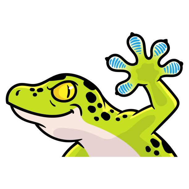 cartoon gecko illustration - gecko stock illustrations, clip art, cartoons, & icons