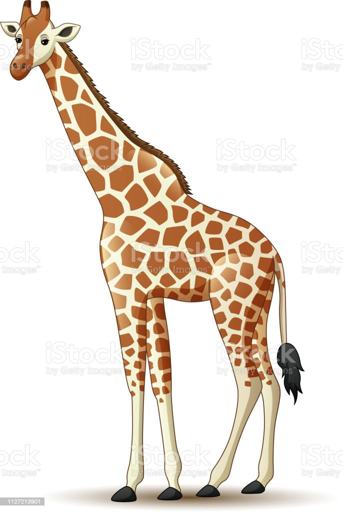 Cartoon Giraffe Isolated On White Background Stock ...