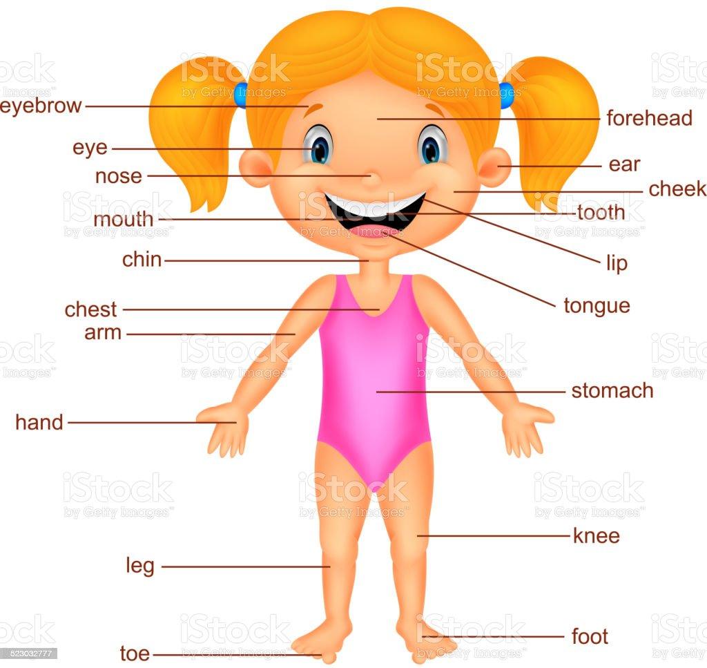 Cartoon Girl Vocabulary part of body vector art illustration