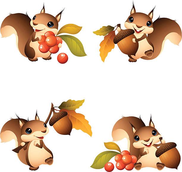 illustrations, cliparts, dessins animés et icônes de dessin animé d'écureuil graphismes avec gland et des fruits rouges - écureui