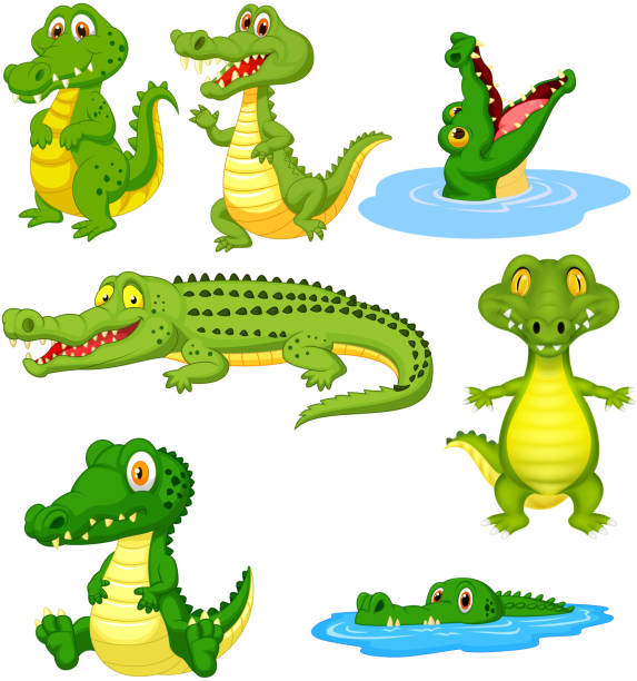 Cartoon green crocodile collection set Vector illustration of Cartoon green crocodile collection set crocodile stock illustrations