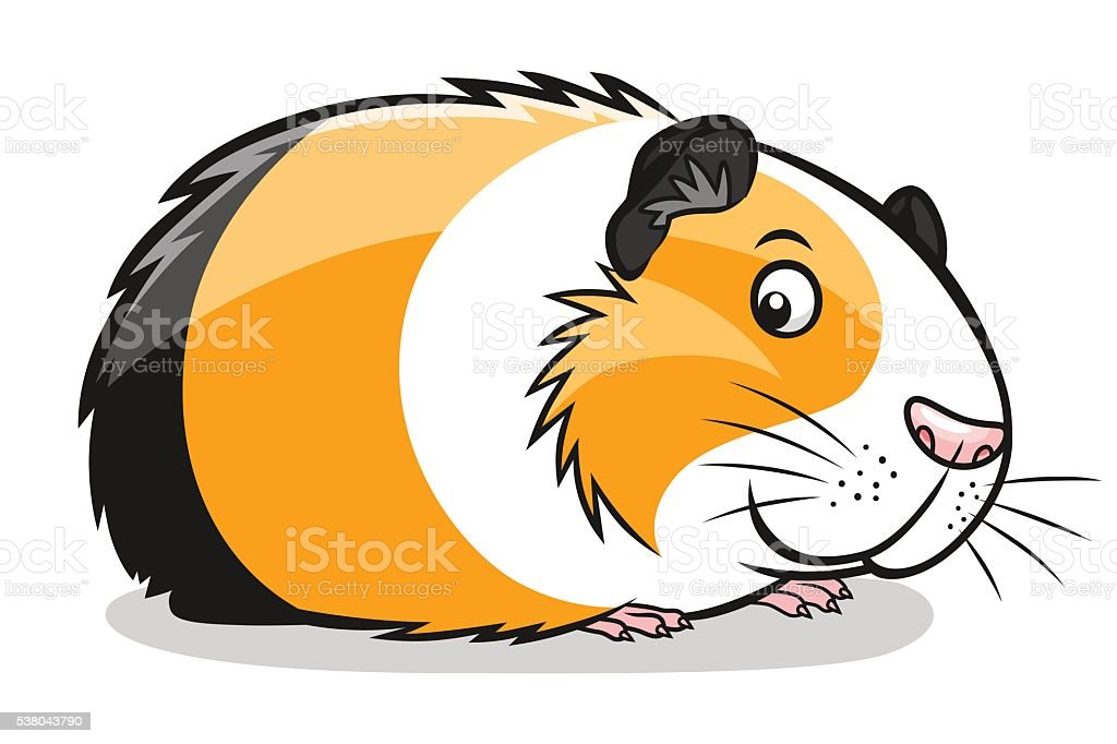 royalty free guinea pig clip art vector images illustrations istock rh istockphoto com guinea pig clip art free guinea pig silhouette clip art