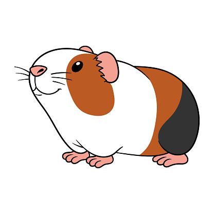 Cartoon Guinea Pig Vector Illustration