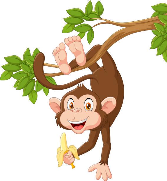 cartoon happy monkey hanging and holding banana - monkey stock illustrations