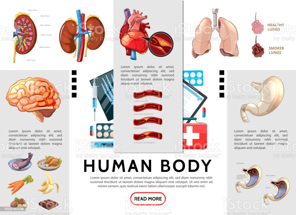 Cartoon Human Body Infographic Template Stock Vector Art More