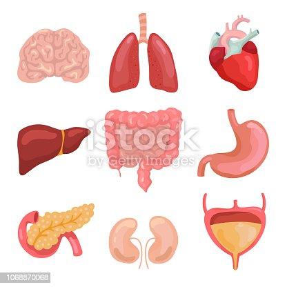 Cartoon human body organs. Healthy digestive, circulatory. Organ anatomy icons for medical chart, gastrointestinal system, intestine heart brain and gallbladder. Medicine vector isolated icons set