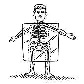 Cartoon Human Figure X-Ray Skeleton Drawing