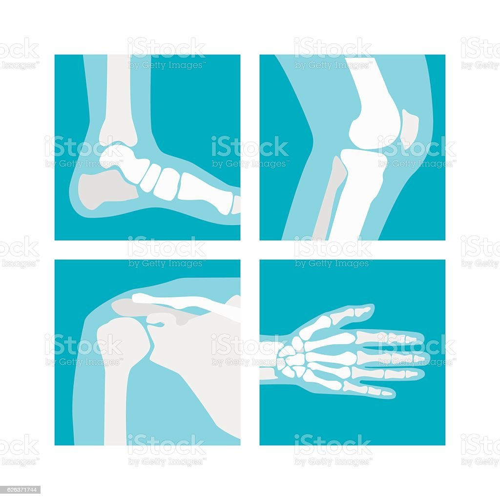 Cartoon Human Joints Set. Vector vector art illustration