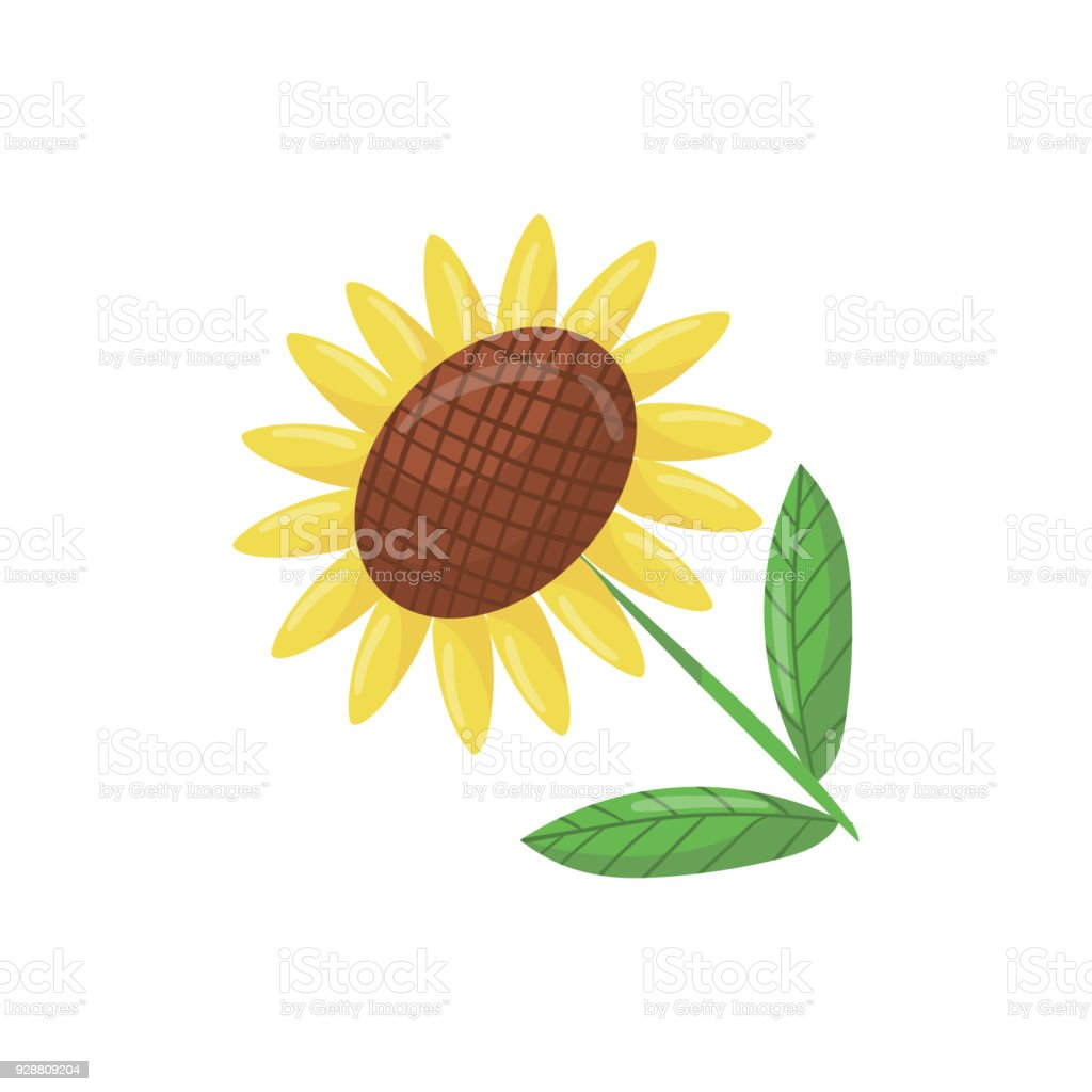 Cartoon icon of beautiful sunflower with green leaves traditional cartoon icon of beautiful sunflower with green leaves traditional agricultural plant with large flower head izmirmasajfo