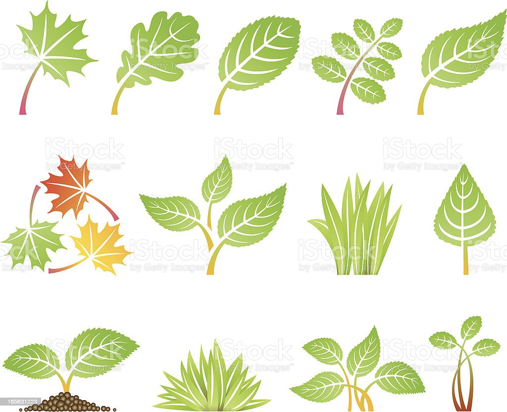 Cartoon icons depicting various types of leaves vector art illustration