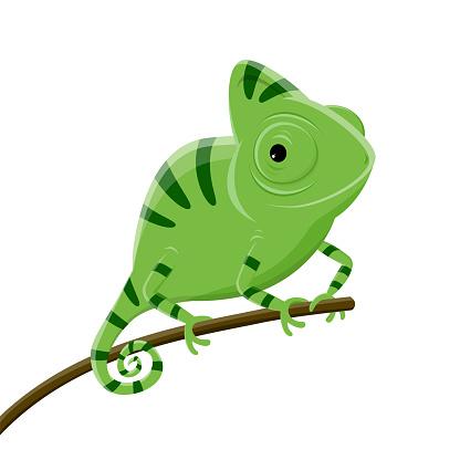 cartoon illustration of a green chameleon