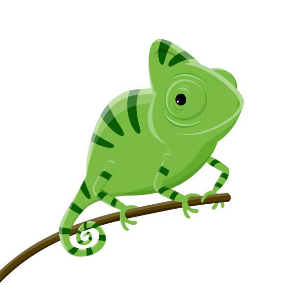 cartoon illustration of a green chameleon - chameleon stock illustrations