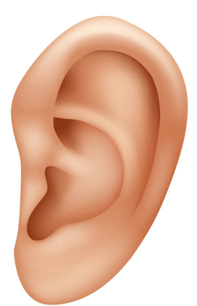 cartoon illustration of ear human isolated on white background - close up stock illustrations, clip art, cartoons, & icons
