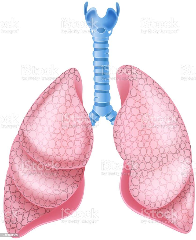 Comic Abbildung Eines Gesunden Lungen Anatomie Stock Vektor Art und ...