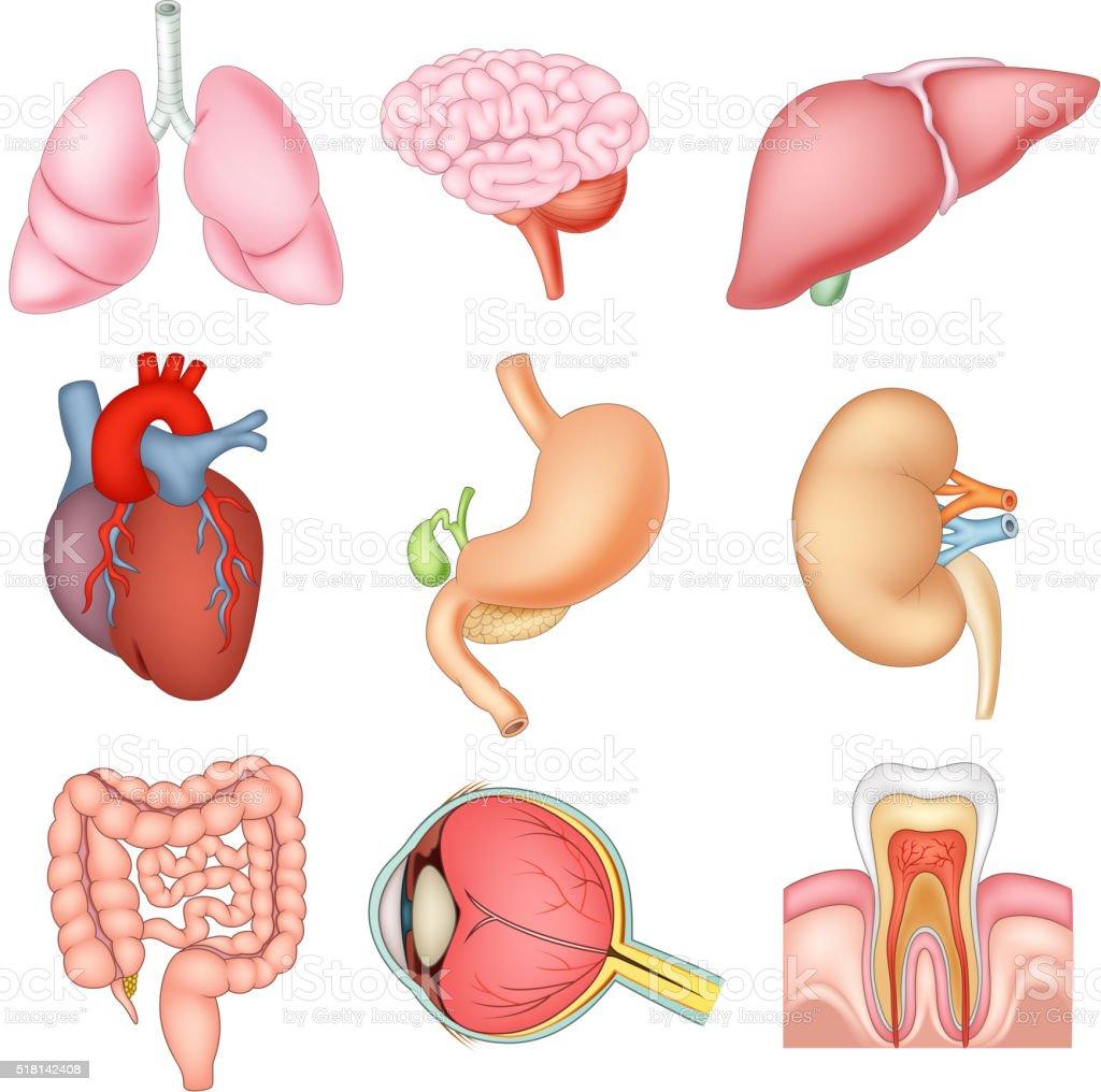 Comic Abbildung Eines Inneren Organe Anatomie Stock Vektor Art und ...
