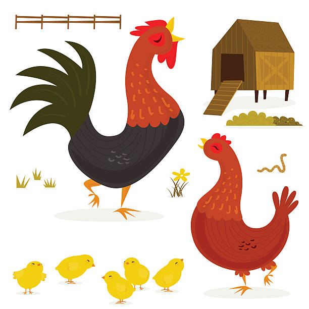 A cartoon image of a chicken with a rooster and her chicks vector art illustration