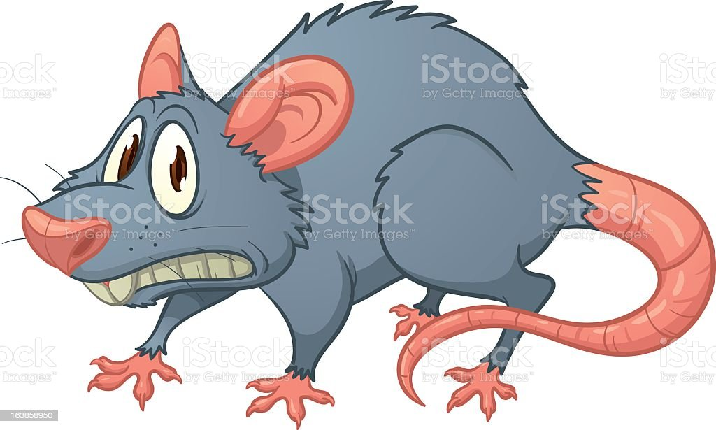 Cartoon image of a scarred rat royalty-free stock vector art